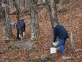Making Maple Syrup - Collecting the sap